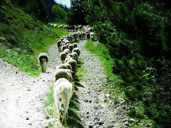 Tratto iniziale del sentiero che da Frattura porta allo stazzo di Chiarano