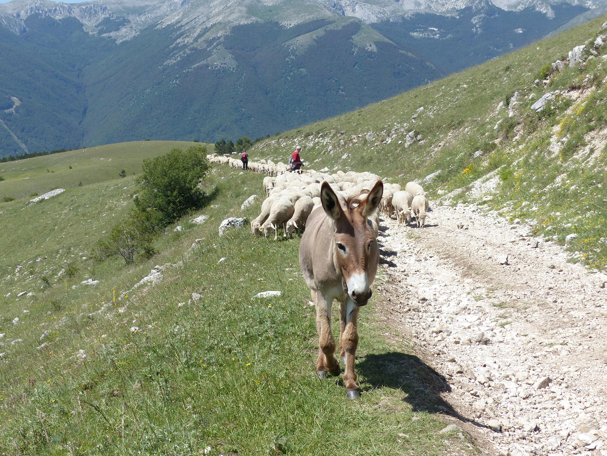 Tratto intermedio del sentiero che da Frattura porta allo stazzo di Chiarano