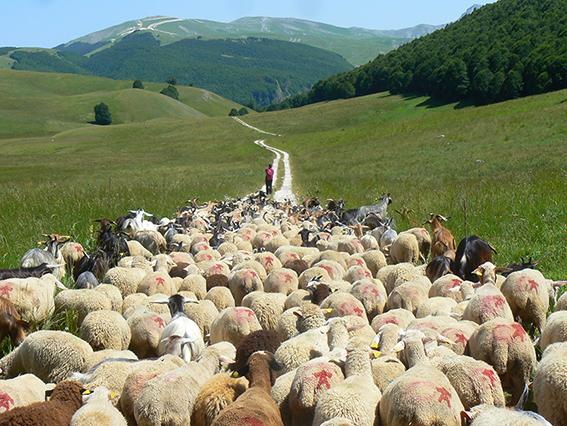 A passo di pecora