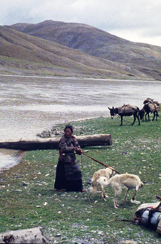 Donna tibetana al guado con cani e asini