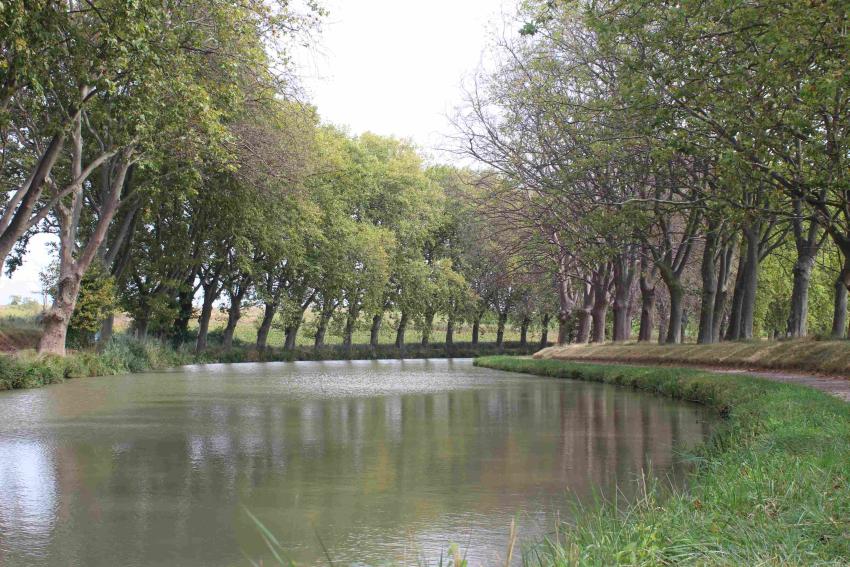 canal-du-midi_09_i-platani