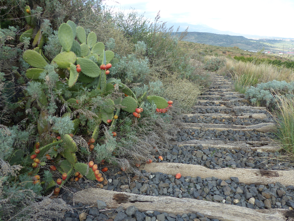 cactus e traversine